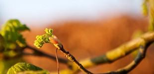 P52 #2 - Springtime