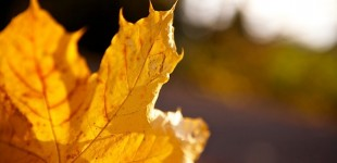 Goldener Herbst